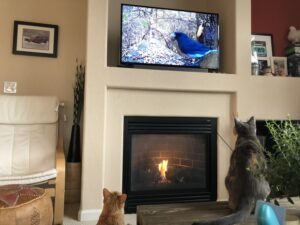 How to Keep Cat from Knocking Over TV- 7 Ways for Doing It